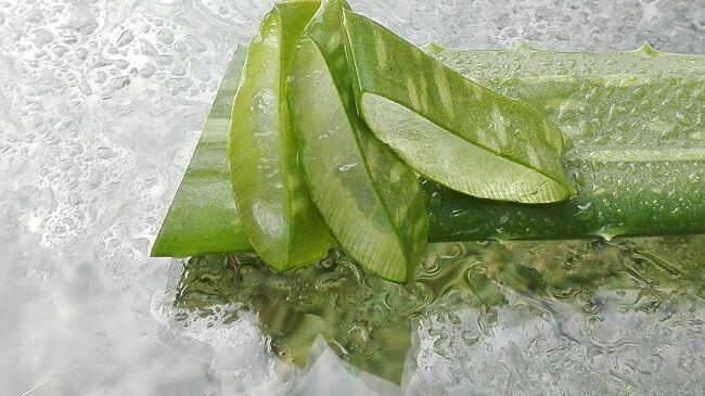 8 ok az aloe vera ital fogyasztására
