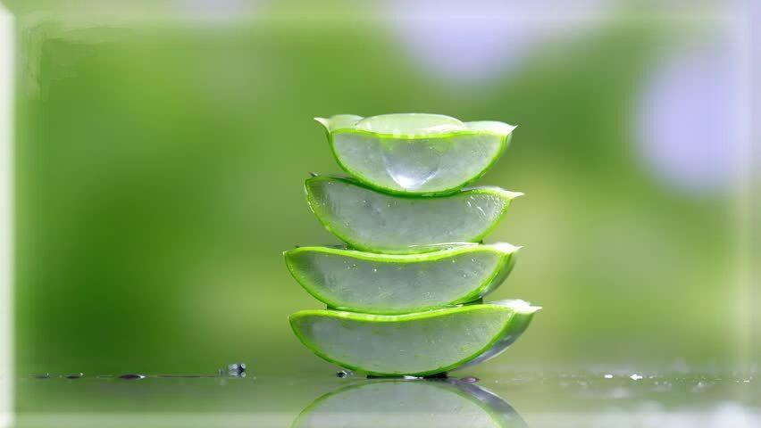 Aloe vera használata hajra